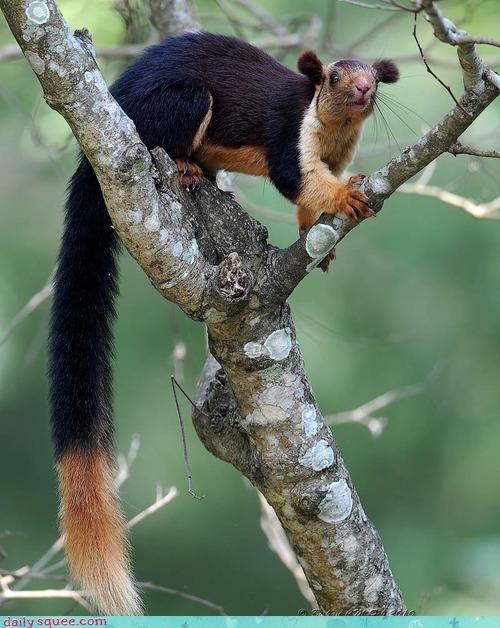 lemur squee whatsit wednesday - 3942133504