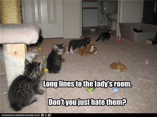 caption,captioned,hate,kitten,ladys-room,long lines,waiting