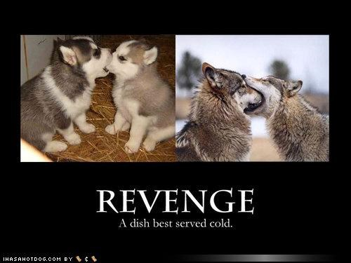 adults,aging,best served cold,dish,husky,puppies,revenge