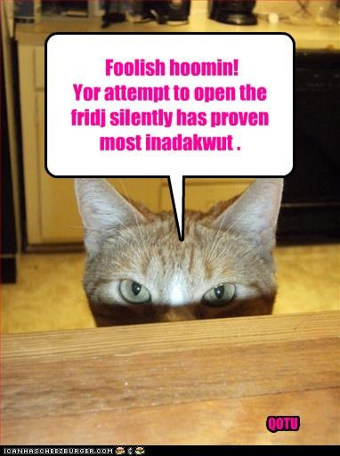Foolish hoomin! Yor attempt to open the fridj silently has proven most inadakwut . QOTU