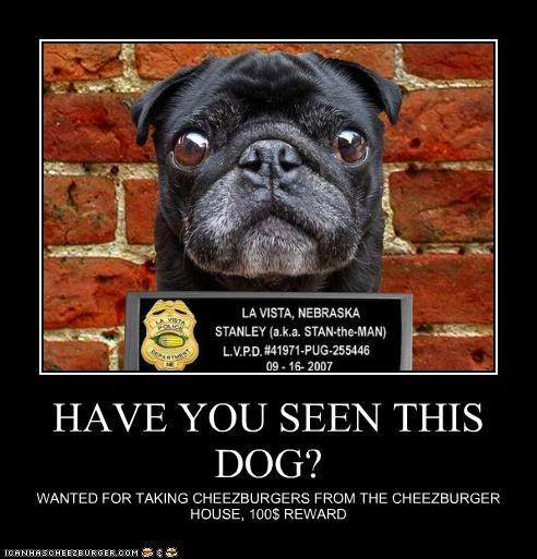 Cheezburger Image 3942915328