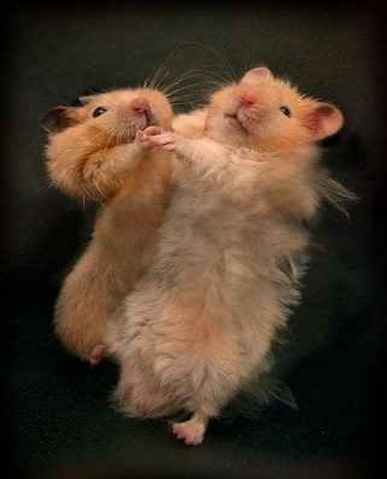 a funny list of animals dancing