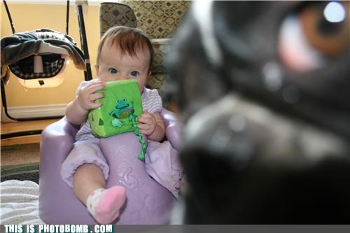Animal Bomb Babies close up cute dogs extreme pets photobomb - 3943080192