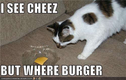 Cheezburger Image 3943336448