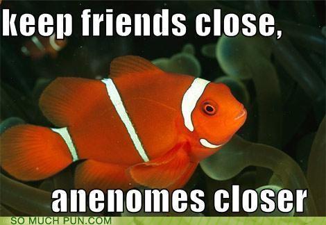 anemones,clownfish,enemies,finding nemo,fish,NEMO,puns