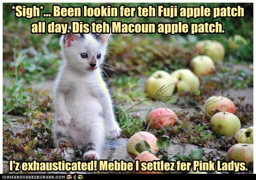 *Sigh*... Been lookin fer teh Fuji apple patch all day. Dis teh Macoun apple patch. I'z exhausticated! Mebbe I settlez fer Pink Ladys.