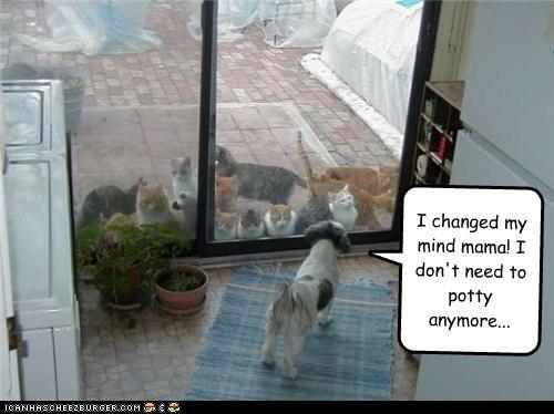 barrier Cats fear glass door inside outside potty silky terrier - 3944281600