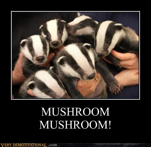 badger hallucinating hilarious mushroom Songs the internets