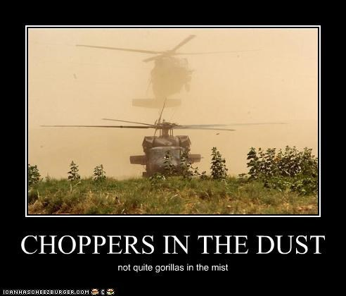CHOPPERS IN THE DUST not quite gorillas in the mist