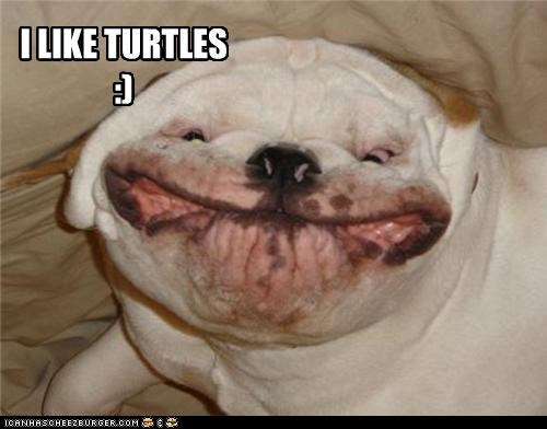 bulldog,critters,cute,dogs,i like turtles,zombie kid