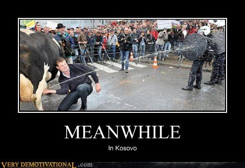 awesome,cows,impossible,kosovo,Meanwhile,riot,wtf