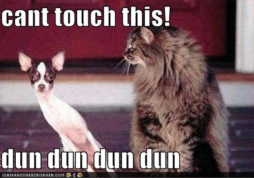 cat chihuahua dancing dodging Hall of Fame mc hammer smug - 3945167360