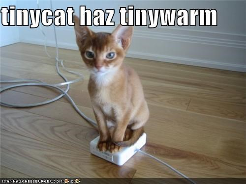 caption captioned cute has one power cord tiny tinycat warm - 3945649920