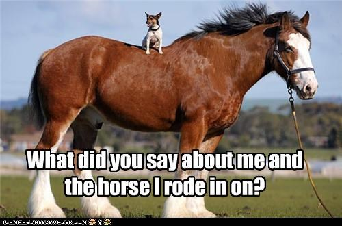 What did you say about me and the horse I rode in on?