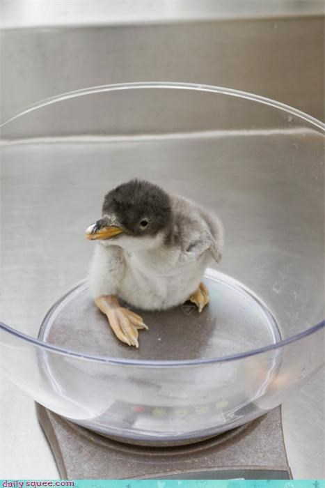 baby bird penguin - 3947191040