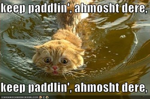 almost there caption captioned cat chanting mantra paddling scared swimming willpower - 3948601856
