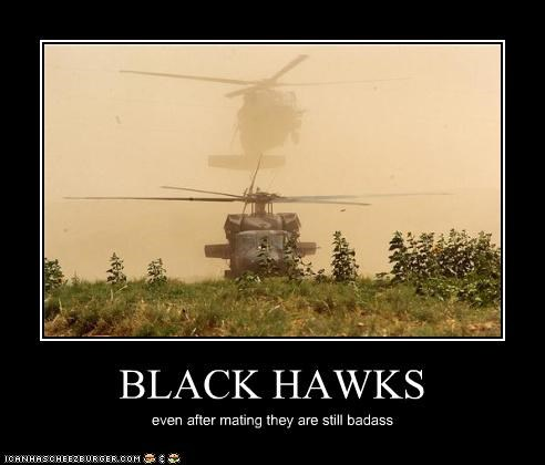 BLACK HAWKS even after mating they are still badass