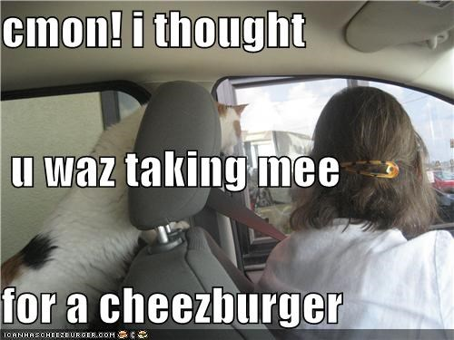 Cheezburger Image 3949618176