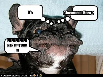 OF THAWTS 0% EHEHEHEHEHHEHE!!!11!!!!!!!! <_______ Cleverness Here WHAT DOGS TINK OF BUY LOLCATS (a.k.a. TO TEH LEFT WAS DAWGS