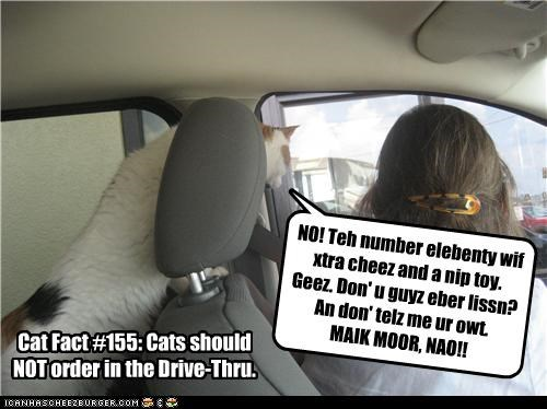 NO! Teh number elebenty wif xtra cheez and a nip toy. Geez. Don' u guyz eber lissn? An don' telz me ur owt. MAIK MOOR, NAO!! Cat Fact #155: Cats should NOT order in the Drive-Thru.