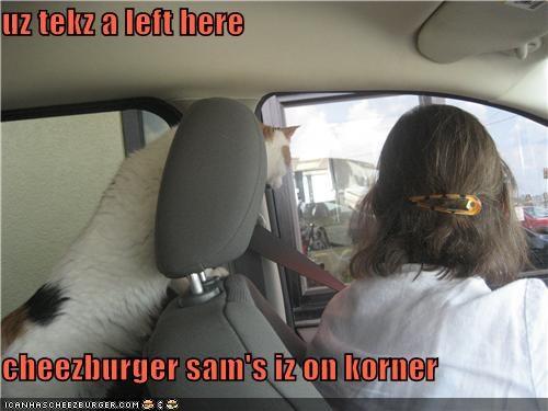 Cheezburger Image 3951374592