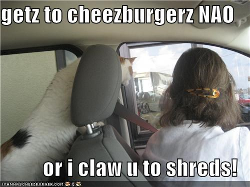 Cheezburger Image 3951408384