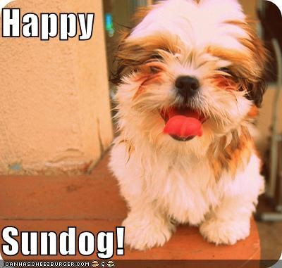 colorful happy sundog smiling terrier whatbreed - 3952248064
