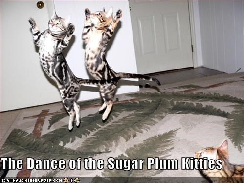 caption captioned cat dancing kitties nutcracker sugar plum - 3952449280