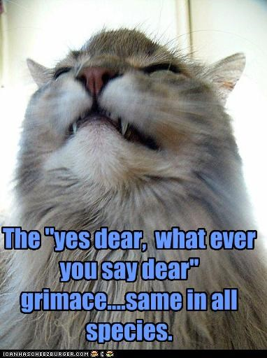 caption captioned cat grimace reaction same species typical whatever you say yes dear - 3953242112