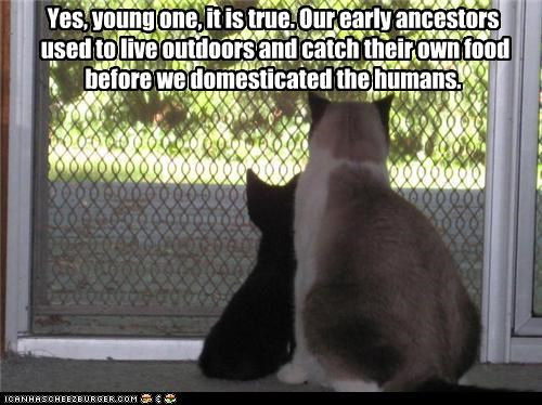 ancestors,caption,captioned,cat,Cats,domesticated,early,food,humans,kitten,nostalgia,olden days,progress,retelling,story,true,young