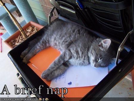 brief briefcase caption captioned kitten nap pun