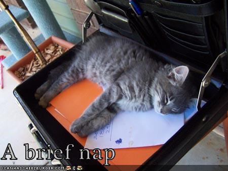 brief briefcase caption captioned kitten nap pun - 3955116800