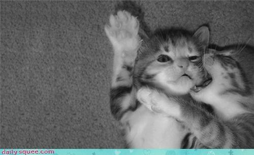 bight kitten twilight - 3955353088