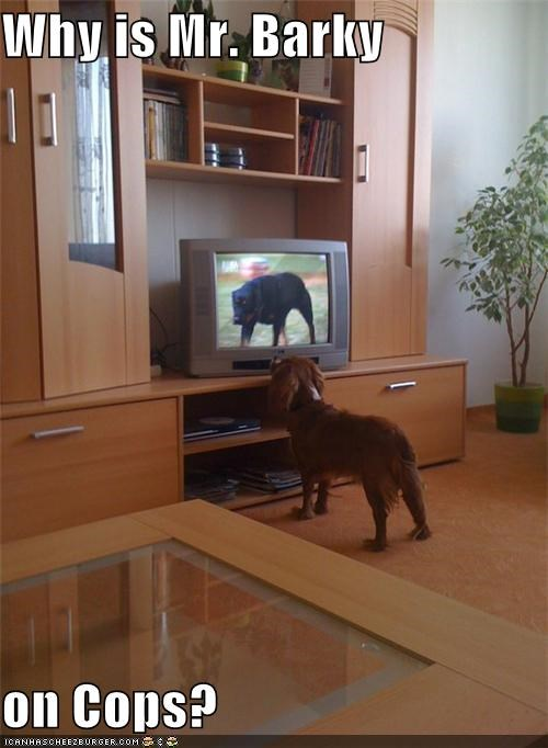 Cheezburger Image 3955916288
