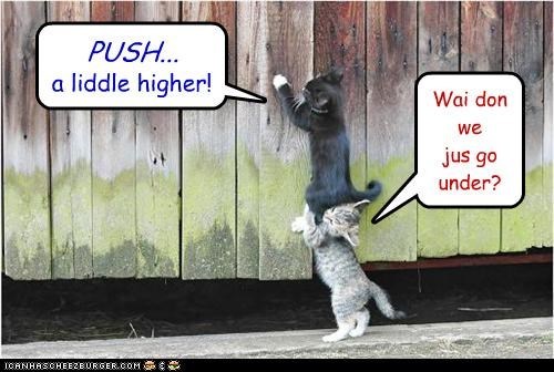 a little higher caption captioned futility helping kitten over push suggestion under