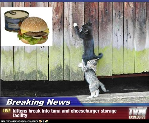 Cheezburger Image 3955985920