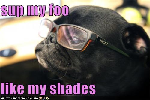 Sup My Foo Like My Shades I Has A Hotdog Dog Pictures Funny
