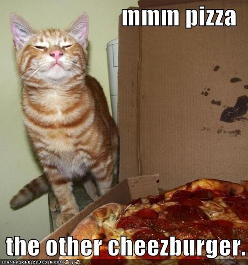 Cheezburger Image 3957888256