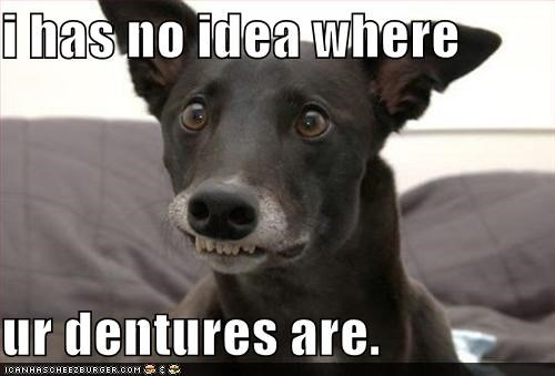 critters,dentures,dogs,no idea,pet,smile,teefs,teeth,whatbreed