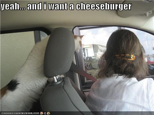 Cheezburger Image 3958375424