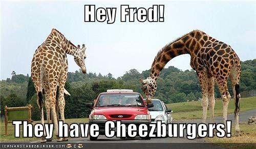 Cheezburger Image 3958954752