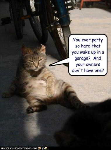 caption,captioned,cat,drunken night,garage,hungover,Party,unknown location
