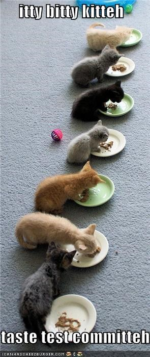 caption,captioned,cute,eating,itty bitty kitty committee,kitten,taste testing