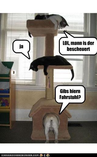 Cheezburger Image 3959900928