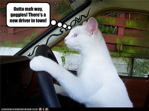 Outta mah way, goggies! There's a new driver in town!