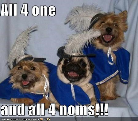 all for one and one for all,costume,friends,pug,team,three musketeers,together,yorkshire terrier