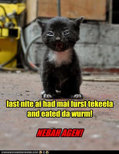 accident,bad night,caption,captioned,cat,drinking,eating,first time,kitten,last night,mistake,never again,tequila,unhappy,worm