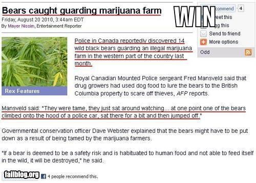 bears drugs failboat oh canada Probably bad News weed - 3962350592