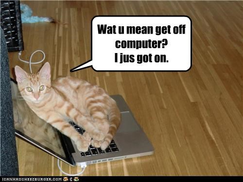 caption captioned cat computer dont-understand get off just got on laying down wat u mean