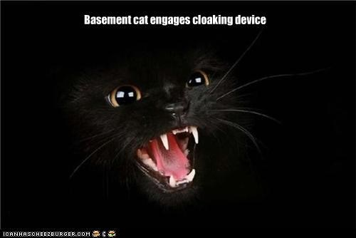 basement cat caption captioned cat cloaking device engaged - 3963035904